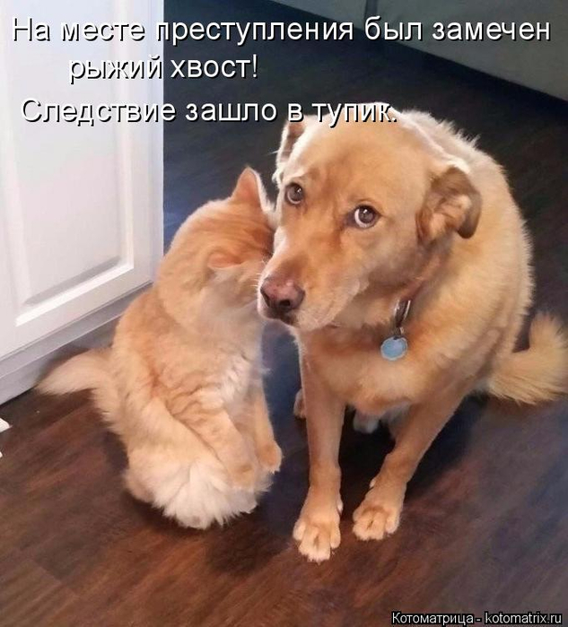 kotomatritsa_N (633x700, 349Kb)