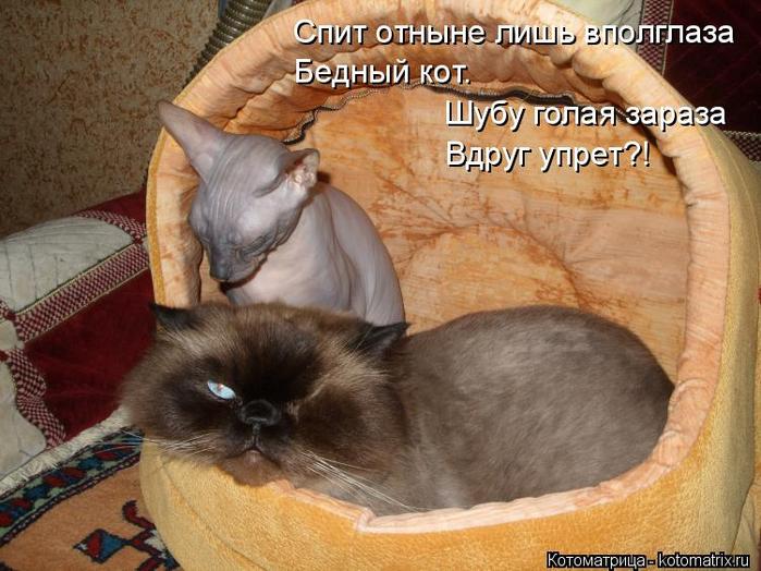 kotomatritsa_r9 (700x524, 396Kb)