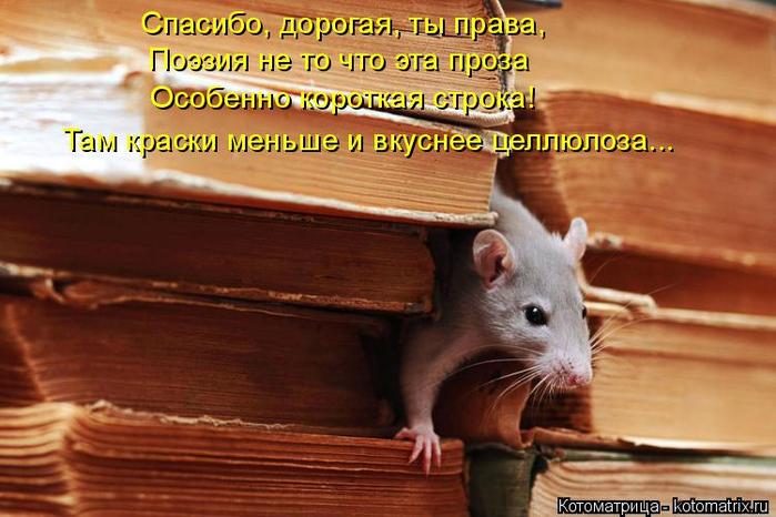 kotomatritsa_Kr (700x466, 351Kb)