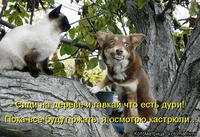 kotomatritsa_vh (640x437, 317Kb)