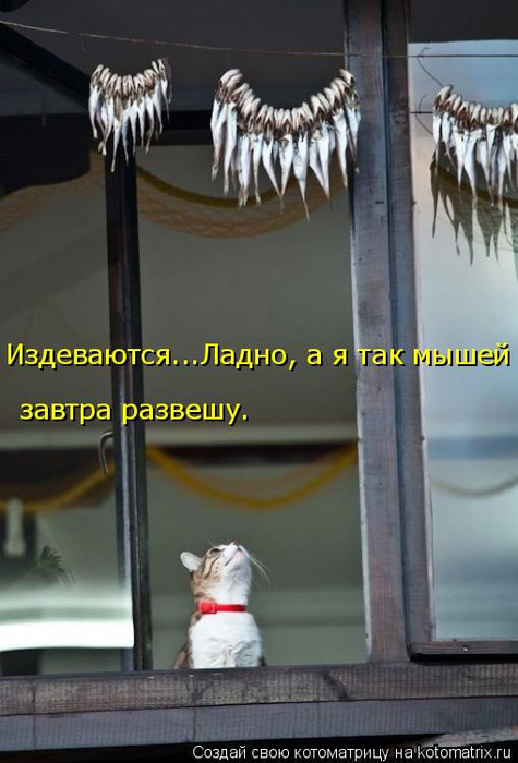 kotomatritsa_F (1) (475x700, 256Kb)