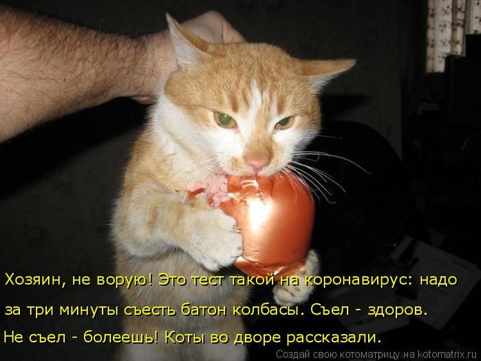 kotomatritsa_L (700x524, 303Kb)