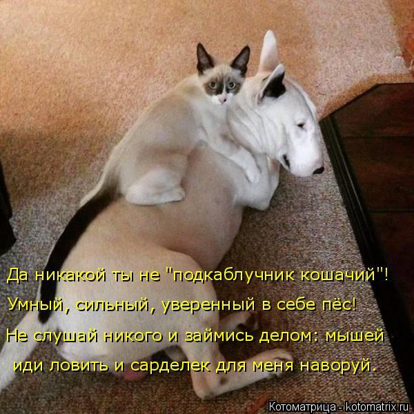 kotomatritsa_X (600x600, 287Kb)