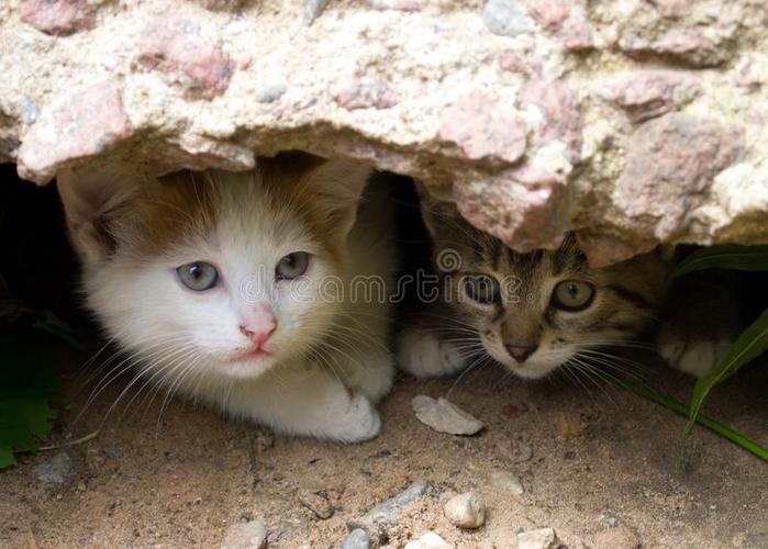 щель-бездомная-котят-из-прятать-105630537 (700x500, 336Kb)