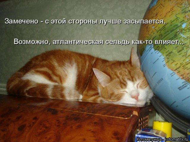 1585334325_kotomatrica-1 (640x480, 207Kb)