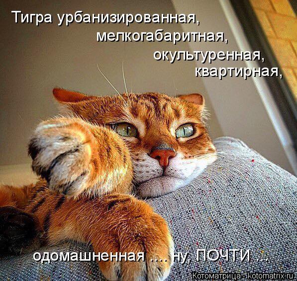 kotomatritsa_4 (597x566, 367Kb)