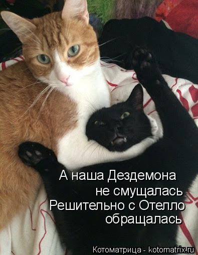 kotomatritsa_C (395x509, 120Kb)