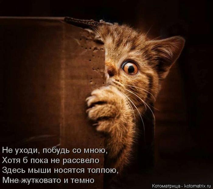 kotomatritsa_Pw (700x622, 304Kb)