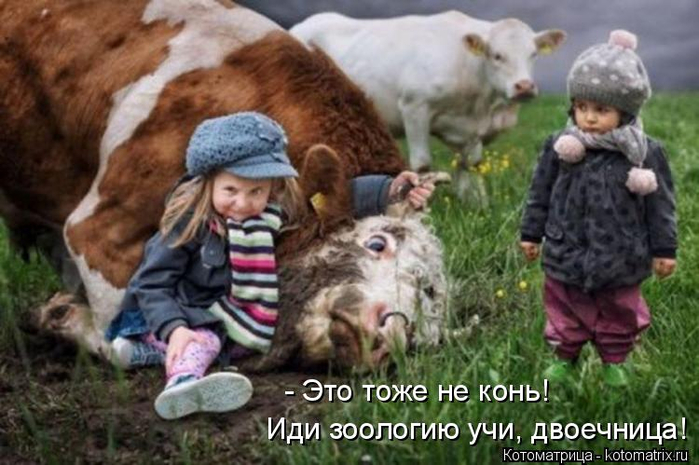 kotomatritsa_i (700x465, 319Kb)