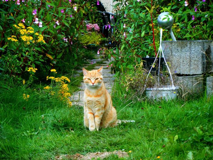 cat-2111634_1920 (700x525, 719Kb)