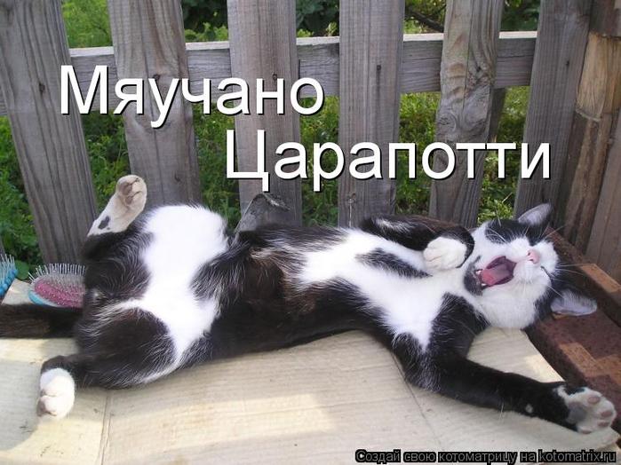 kotomatritsa_17 (700x524, 336Kb)