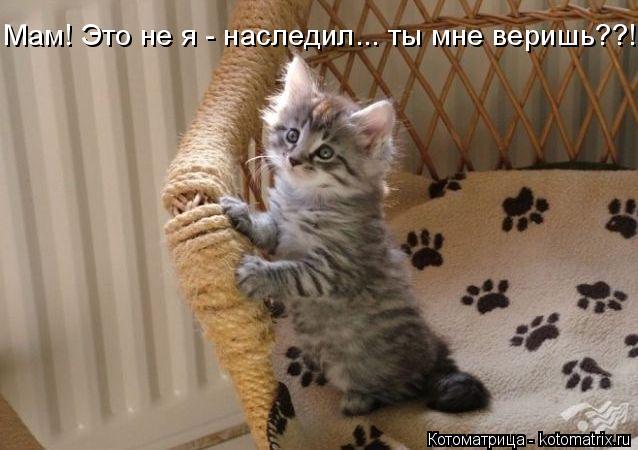 kotomatritsa_Gn (638x450, 177Kb)