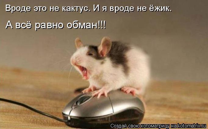 kotomatritsa_w (682x425, 144Kb)