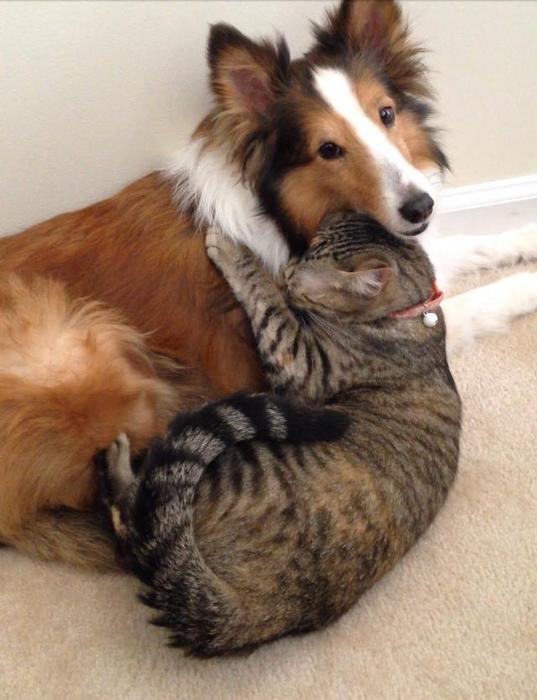funny_animals_04016_002 (537x700, 236Kb)