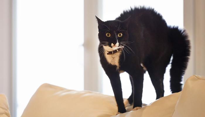 cat-scared (700x400, 99Kb)