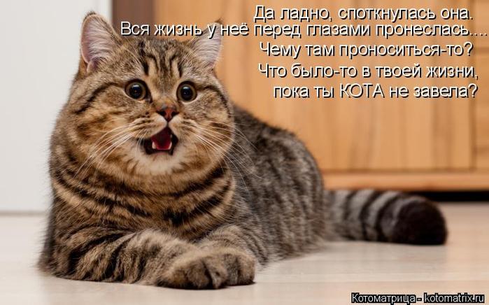 kotomatritsa_4e (700x436, 305Kb)