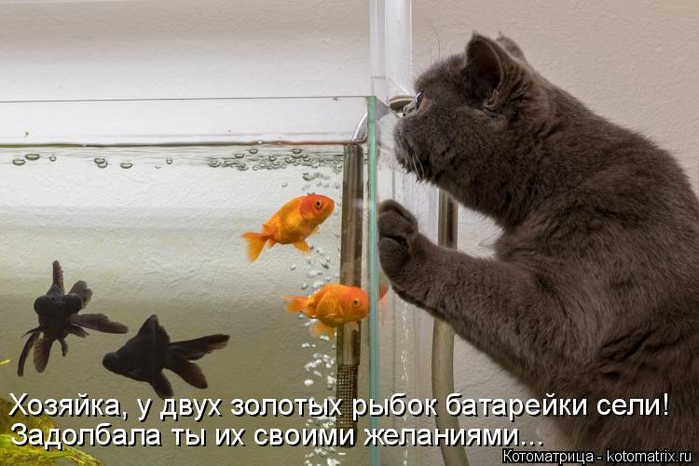 kotomatritsa_HN (700x466, 271Kb)