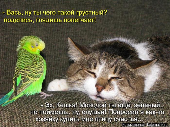 kotomatritsa_MiJ (700x520, 443Kb)