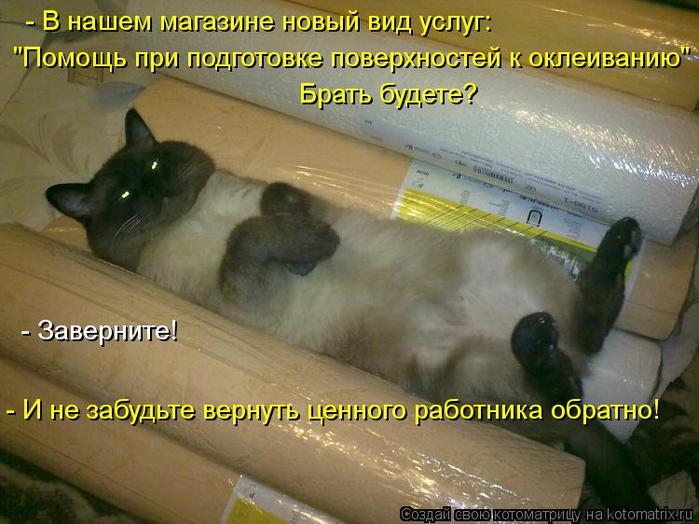 kotomatritsa_u (700x524, 385Kb)
