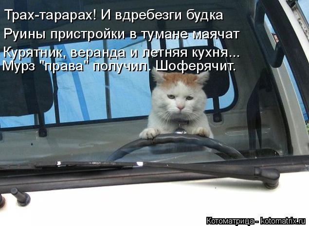 kotomatritsa_Y (635x466, 190Kb)