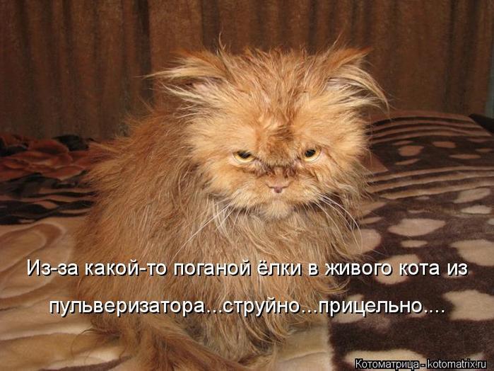 2714816_kotomatritsa_M_1 (700x524, 64Kb)
