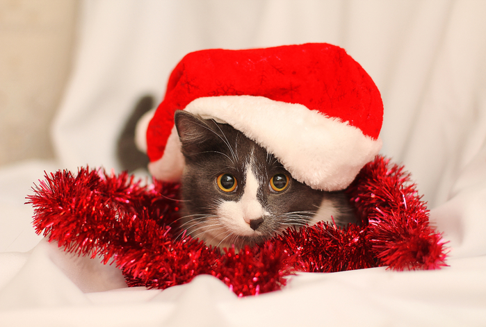 2018Animals___Cats_Cat_in_a_red_Christmas_hat_with_tinsel_128996_ (700x471, 365Kb)