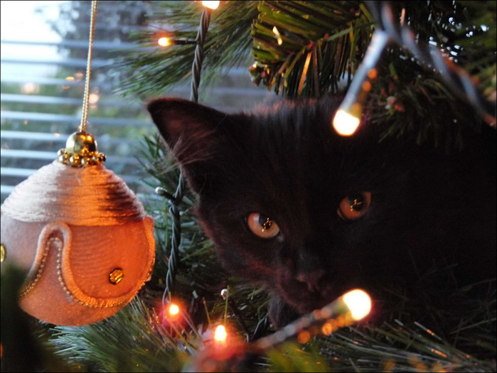 cat-christmas-tree-014 (700x525, 347Kb)