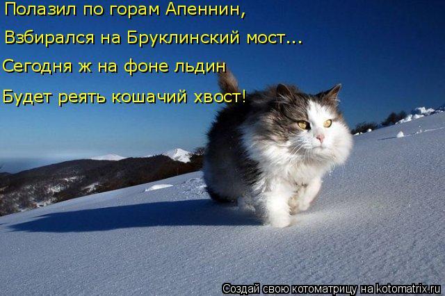 kotomatritsa_3 (640x426, 221Kb)