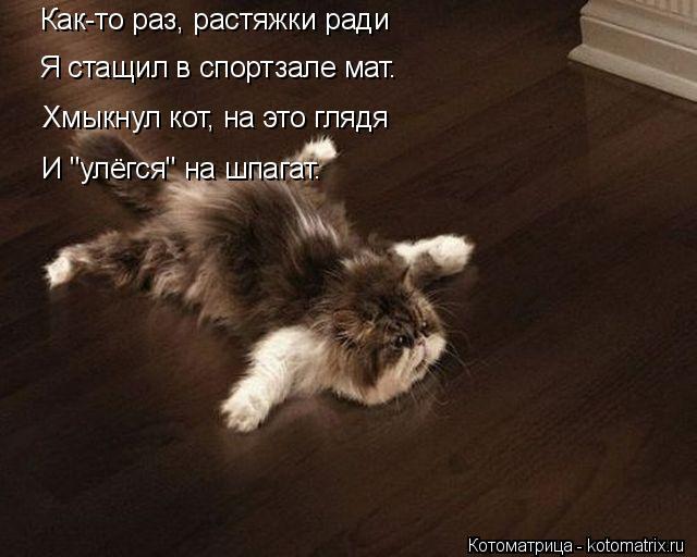 kotomatritsa_a (1) (640x512, 170Kb)