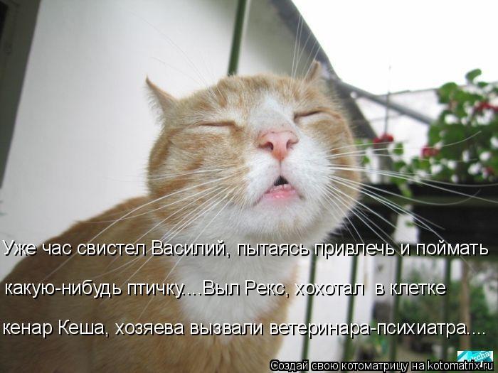 kotomatritsa_gu (700x525, 222Kb)