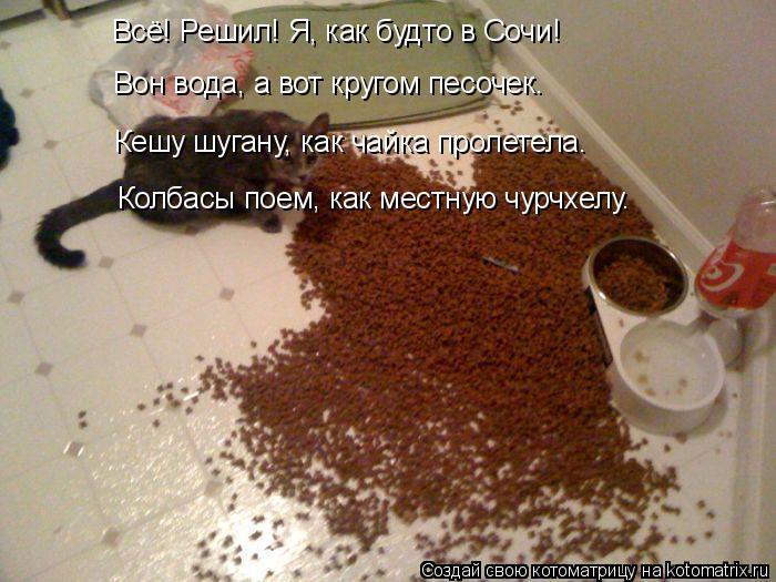 kotomatritsa_J8 (700x525, 326Kb)