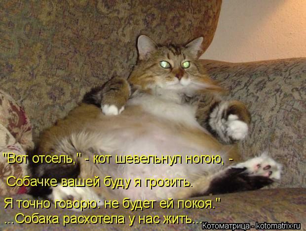 kotomatritsa_K (620x467, 245Kb)