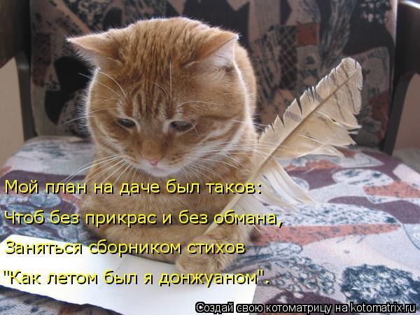 kotomatritsa_P (600x450, 235Kb)