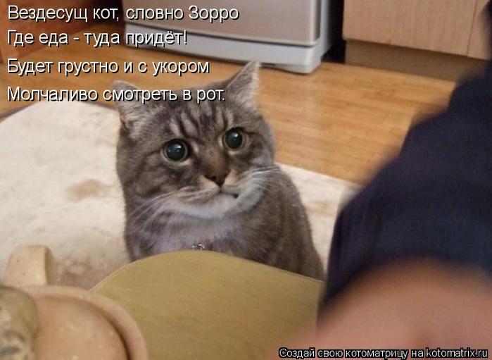 kotomatritsa_v (700x511, 280Kb)