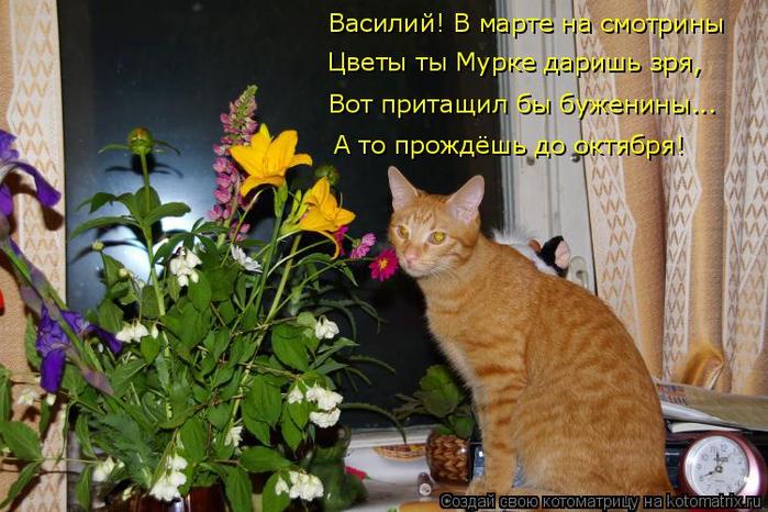 kotomatritsa_y (1) (700x466, 417Kb)