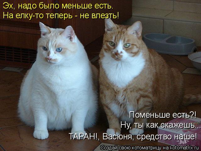 kotomatritsa_2 (640x480, 231Kb)