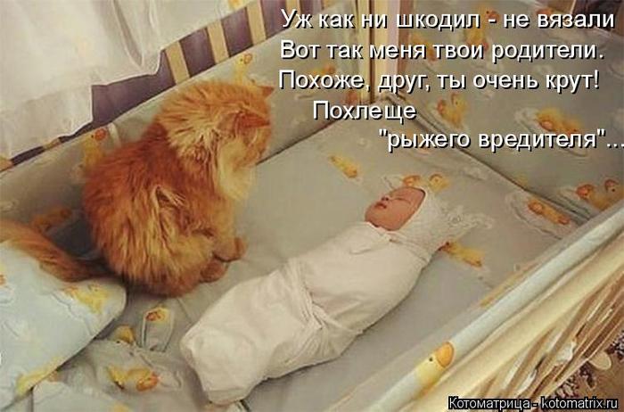 kotomatritsa_a (1) (700x462, 308Kb)