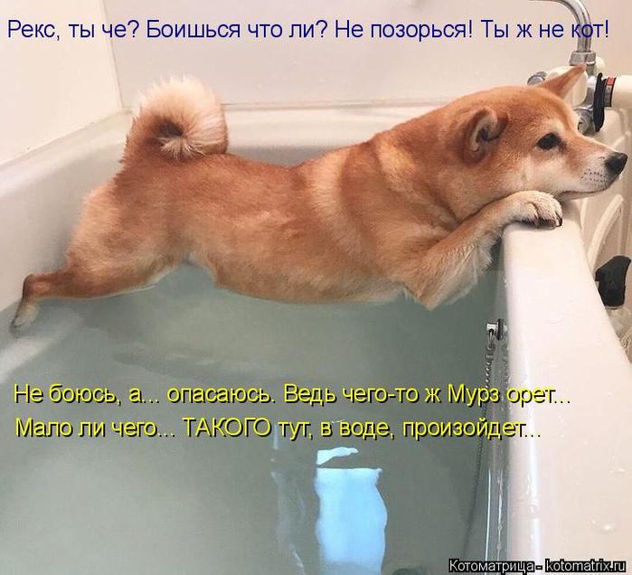 kotomatritsa_B (1) (700x636, 369Kb)