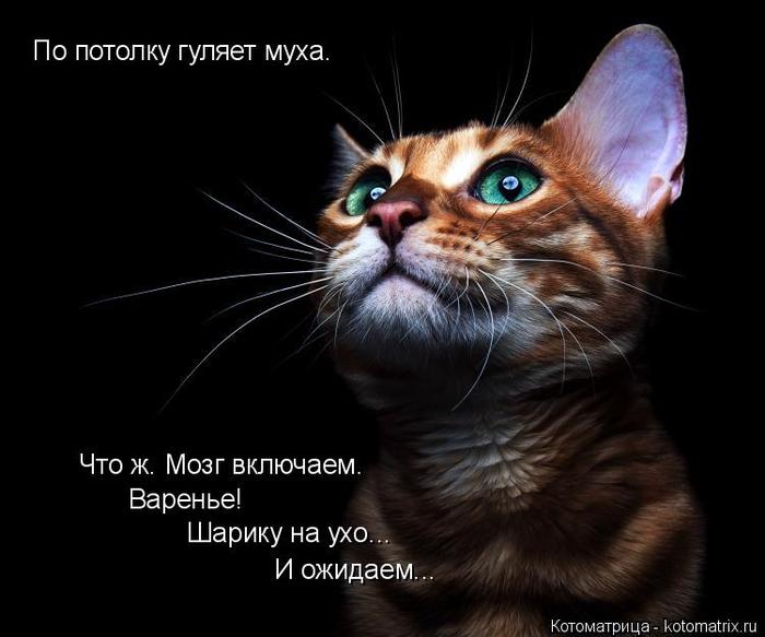 kotomatritsa_C (700x583, 217Kb)