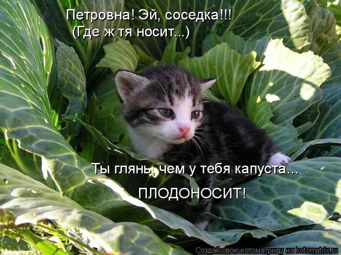 kotomatritsa_G (1) (700x524, 411Kb)