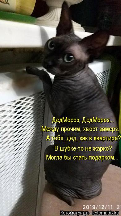 kotomatritsa_H (391x700, 253Kb)