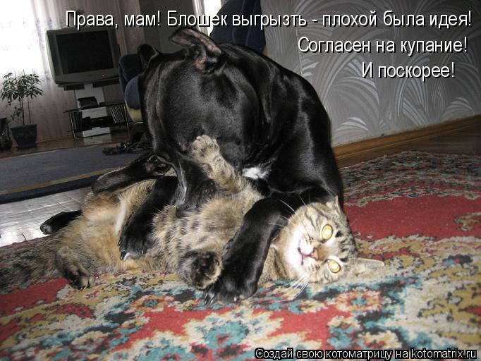 kotomatritsa_Ho (682x512, 245Kb)