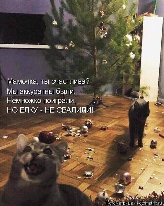 kotomatritsa_s (560x700, 385Kb)