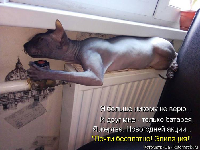 kotomatritsa_Yv (700x524, 308Kb)