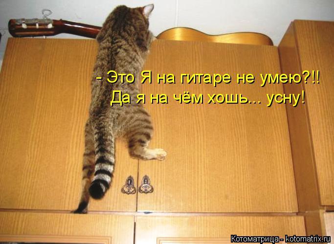kotomatritsa_Ac (683x499, 218Kb)