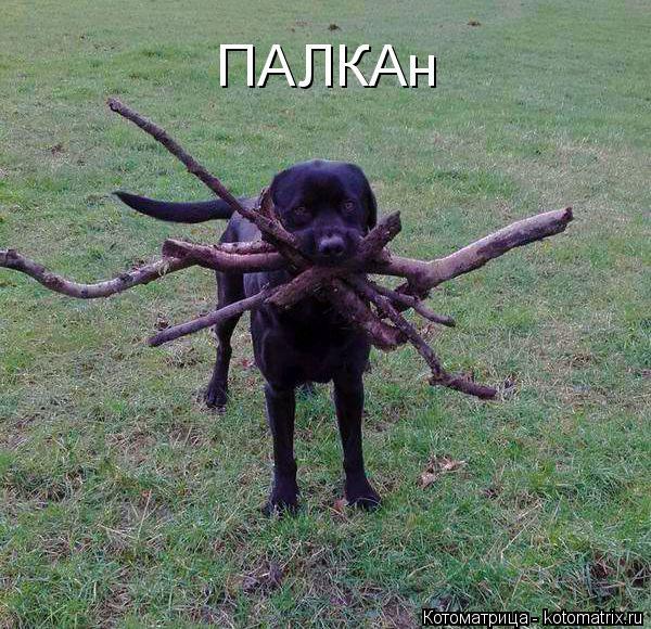 kotomatritsa_e (600x580, 320Kb)
