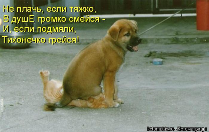kotomatritsa_lw (700x441, 272Kb)