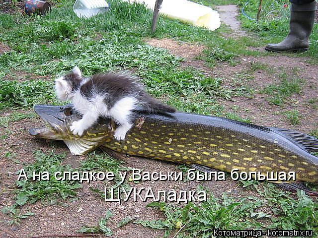 kotomatritsa_PA (640x480, 379Kb)