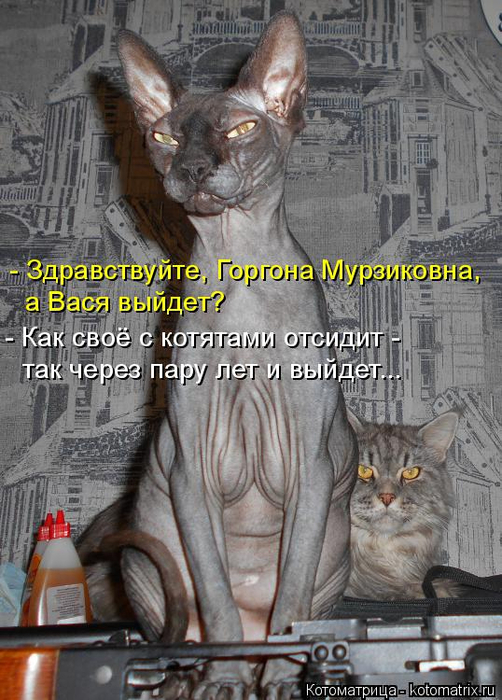 kotomatritsa_sc (502x700, 373Kb)