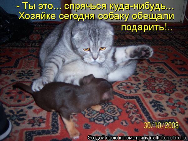 kotomatritsa_WN (600x450, 250Kb)